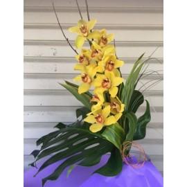 L Orchidée Sublime